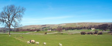 wensleydale_pastures